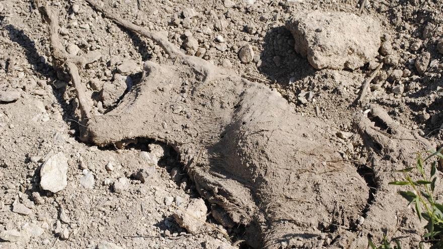 Cadáver de un perro en una fosa común en la finca de Bullas (Murcia). Foto: La Casita de López