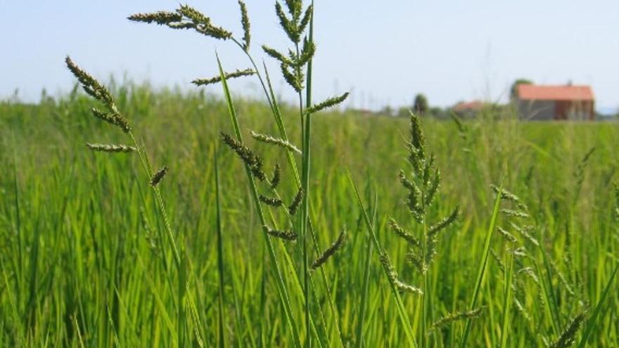 La Junta autoriza la campaña oficial de tratamiento fitosanitario contra la pudenta / Junta