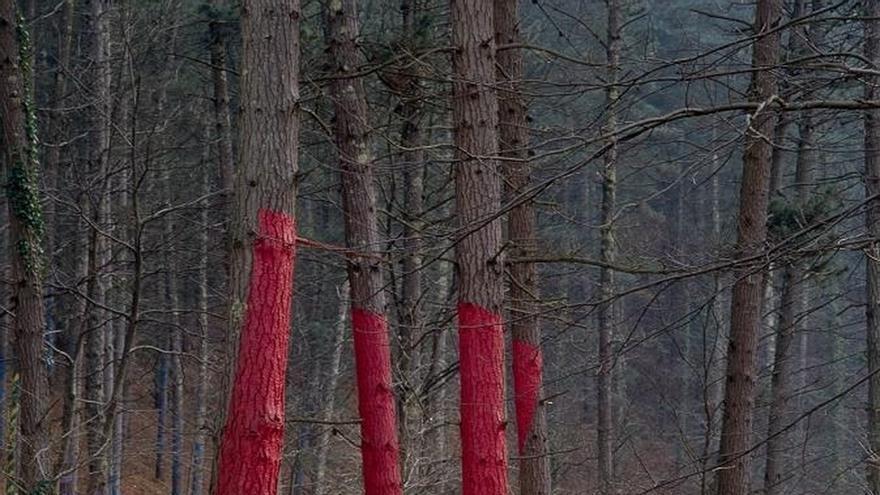 Diputación iniciará el próximo viernes las visitas guiadas al Bosque de Oma