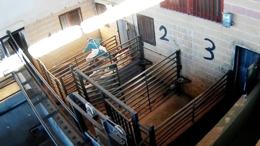 Un operario salta sobre corderos en una imagen del vídeo / Equalia.