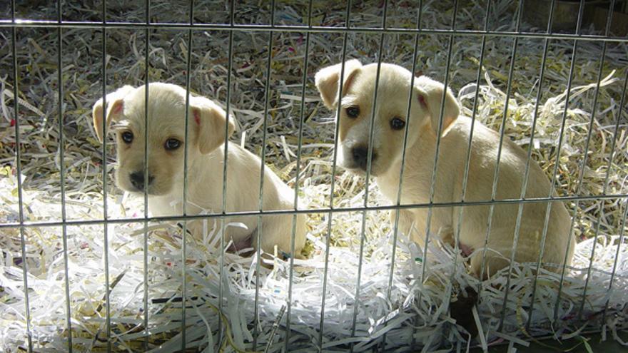 Dos cachorros en el Centro de Control Animal de Sadeco.