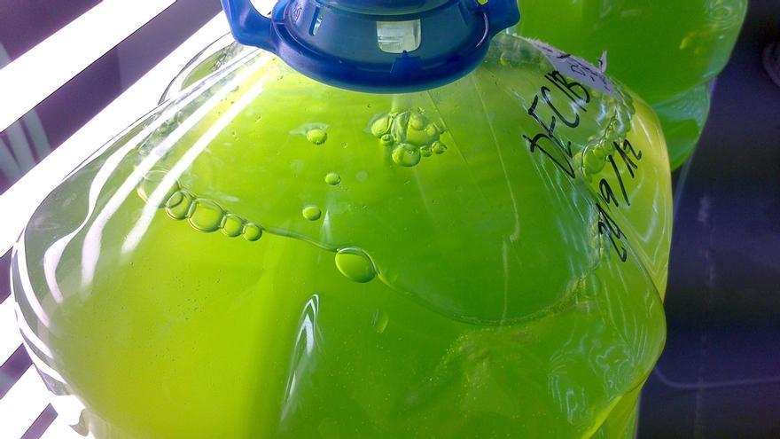 Demuestran la capacidad para producir biocombustible de una microalga del río Tinto