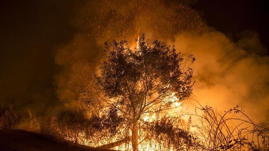 Permanece en observación uno de los forestales heridos en Ourense