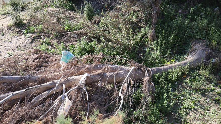 Huermur denuncia la inacción de la CHS ante los miles de plásticos y envases que se acumulan en el Río Segura