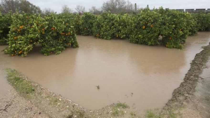 Campo de naranjos inundado por las lluvias torrenciales