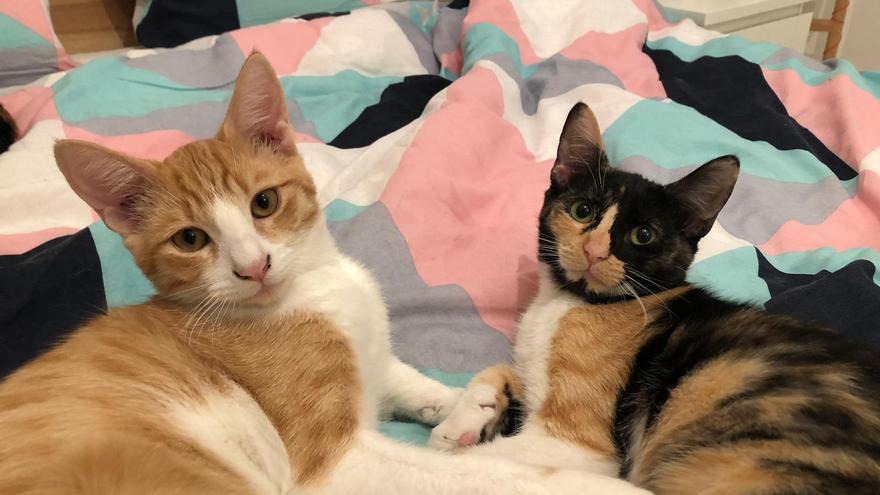 Richi y Povery también están en adopción a través de la SPAP. Tienen seis meses y son inseparables.