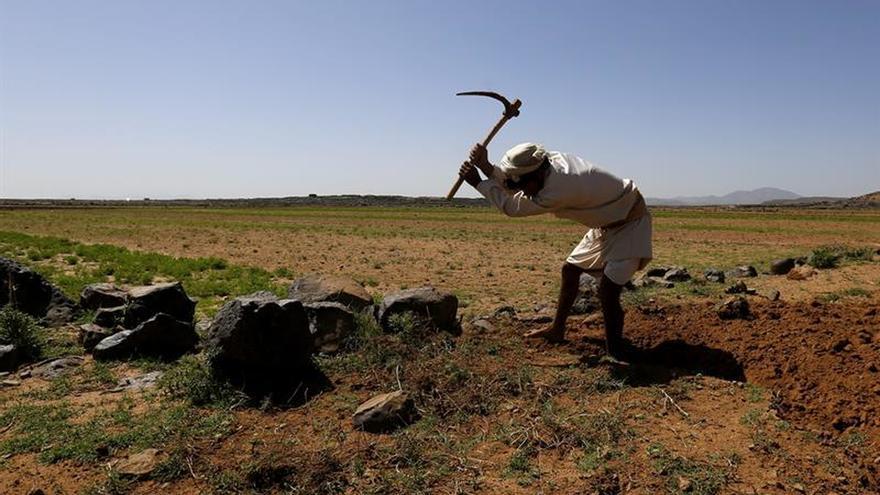 El riesgo de hambruna está controlado, pero crecen las necesidades, según la ONU