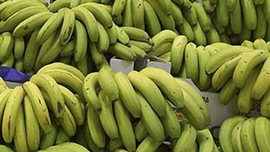 Racimos de plátanos.