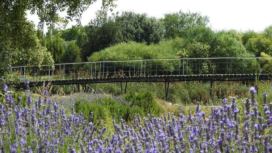 El Jardín Botánico de Castilla-La Mancha también se podrá disfrutar al anochecer