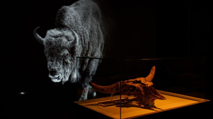 Montaje 'Kiputz' en el Museo de Altamira