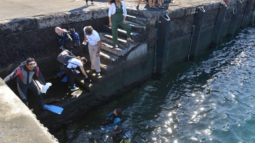 Buceadores en La Restinga participando en la limpieza del puerto (CABILDO DE EL HIERRO)