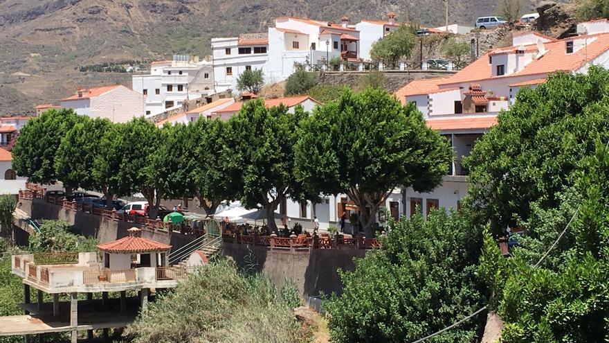 Los árboles en la calle Doctor Domingo Hernández Guerra, la principal del pueblo de Tejeda (Gran Canaria).