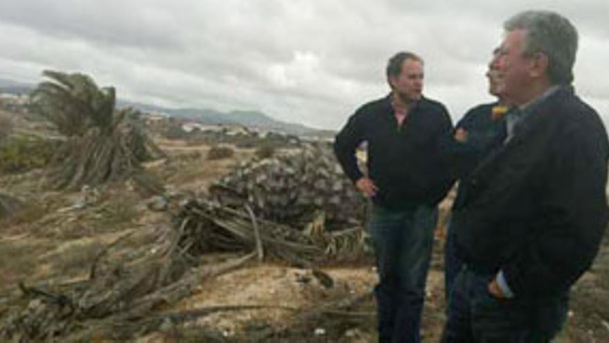 Visita de Pedro Quevedo (NC) al Palmeral de El Lasso. CANARIAS AHORA