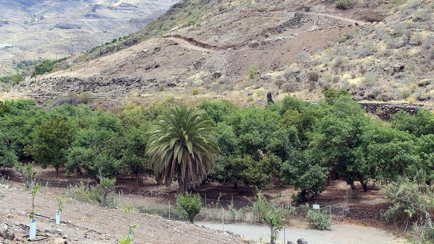Pacífico rincón en el fondo del barranco. (Canarias Ahora).