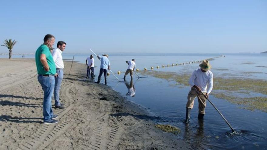 Imagen de las tareas de retirada de la ova de la superficie del agua en el entorno del club náutico de Los Urrutias / CARM