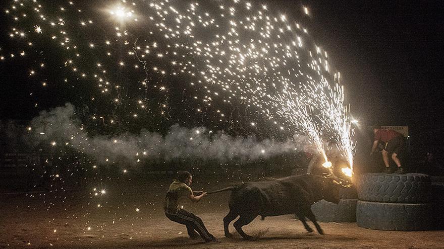 El maltrato animal en Santa Fiesta. Kike Carbajal / Santa Fiesta