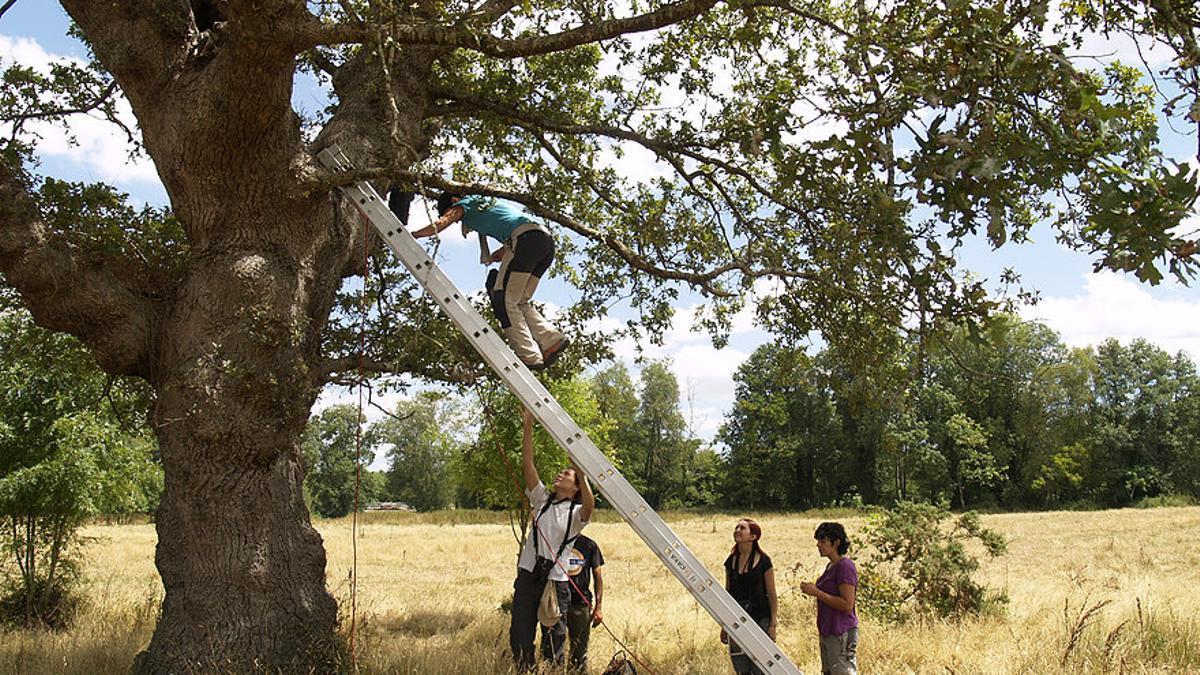 Un equipo realizando labores en uno de los proyectos de custodia del territorio en Galicia