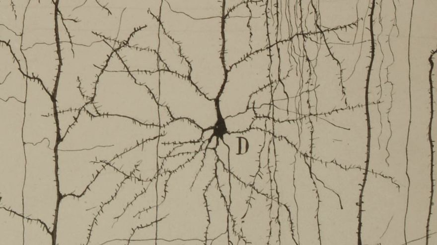 Más de un centenar de piezas enseñan al Cajal científico, humanista y artista