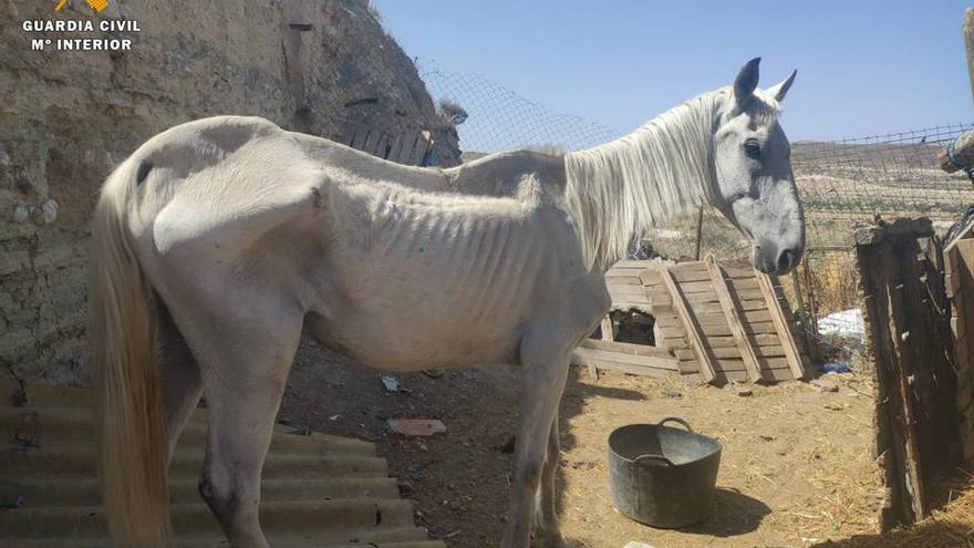 El caballo estaba en muy malas condiciones y con síntomas de inanición .