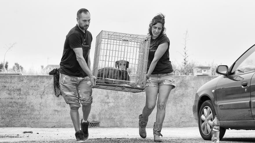 Voluntarias de ERA rescantando a Neli con una jaula-trampa.