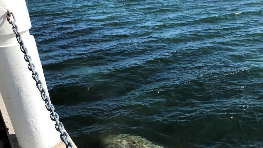 Un manatí nada cerca de la costa, donde la temperatura del agua es más cálida, debido a la ola de frío de este miércoles en Miami, Florida (EE.UU.).