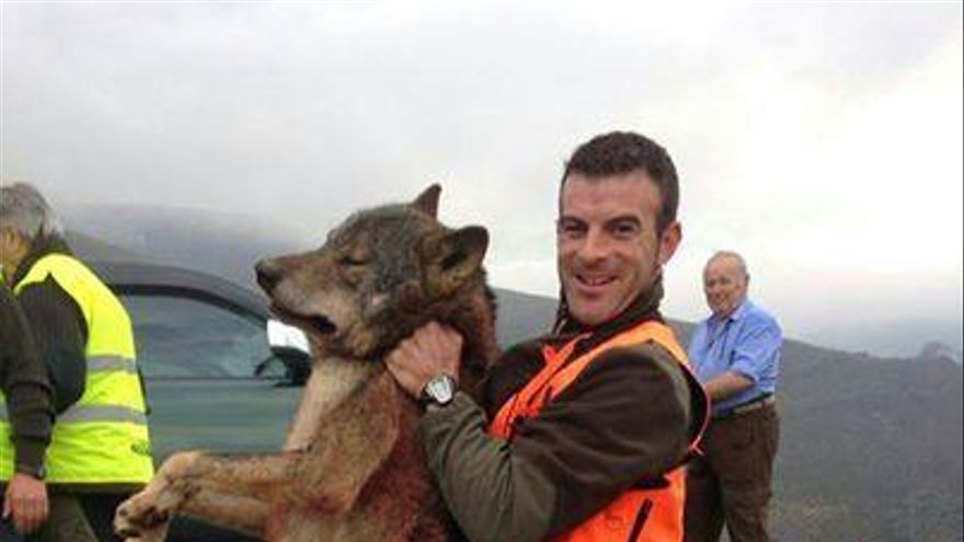 Imagen del lobo abatido en Karranza que ha circulado por las redes sociales