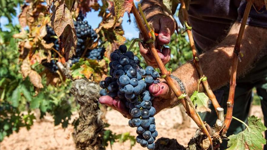 Bodegas y viticultores de Rioja marcan un precio para las uvas de 2014