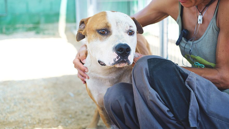 Los perros de razas potencialmente peligrosas son de las más comercializadas en internet, y muchos terminan abandonados