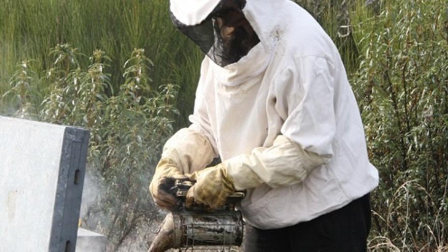 Extremadura solicita al Gobierno una reducción de los módulos de IRPF para sus apicultores