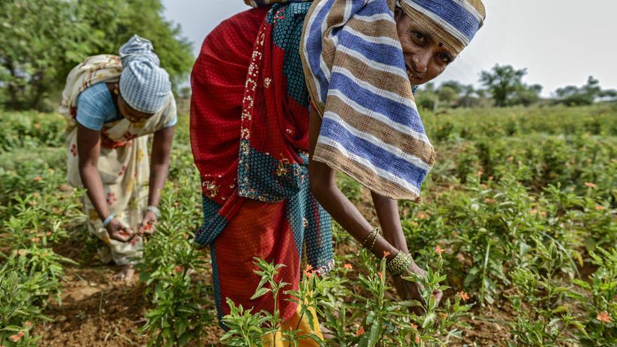 Las mujeres en India son consideradas una mercancía cuyo valor reside en procrear y trabajar./ Zigor Aldama