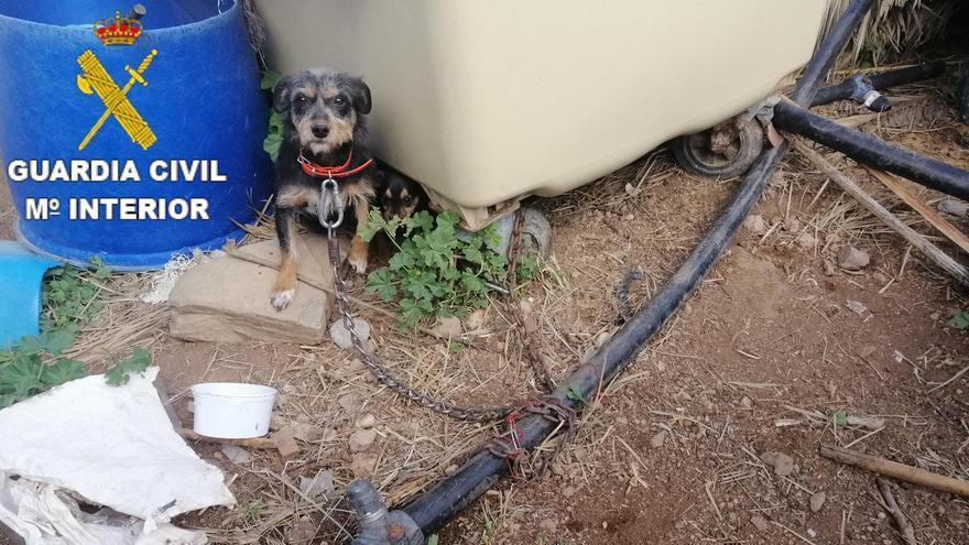 Los dos perros, atados casi sin espacio y en muy malas condiciones en una finca de Gran Canaria