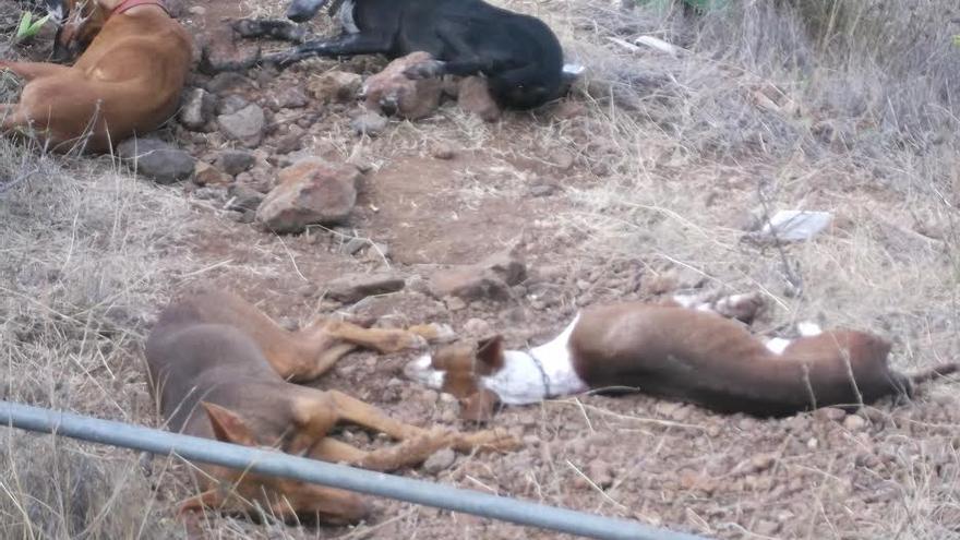 Los perros envenenados, en la imagen, no respondían a los antídotos. Foto cedida por la Federación Insular de Caza.