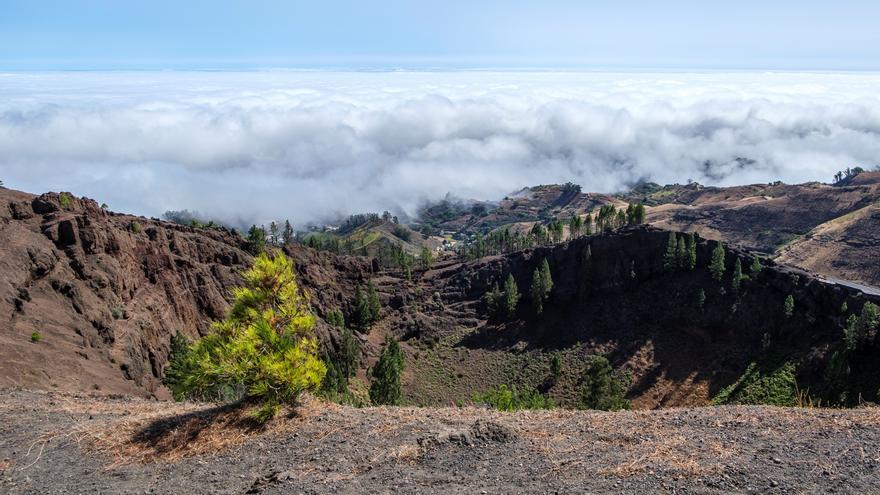Gran Canaria ha recuperado el 80% de su paisaje un año después del fuego