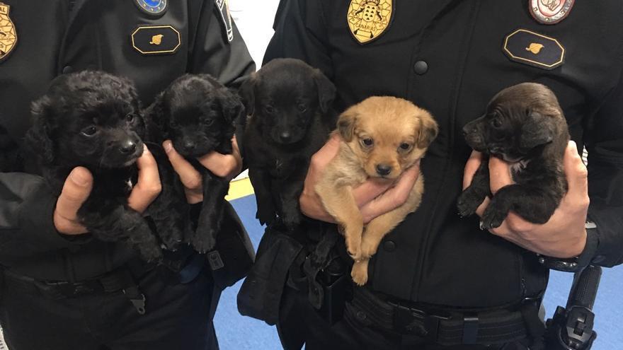 Cachorros interceptados por la Policía Local