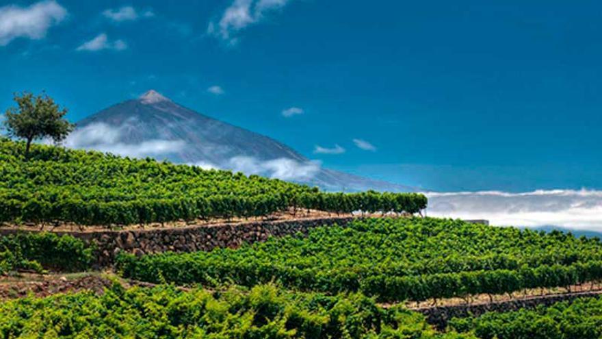 Viñedos en el norte de Tenerife