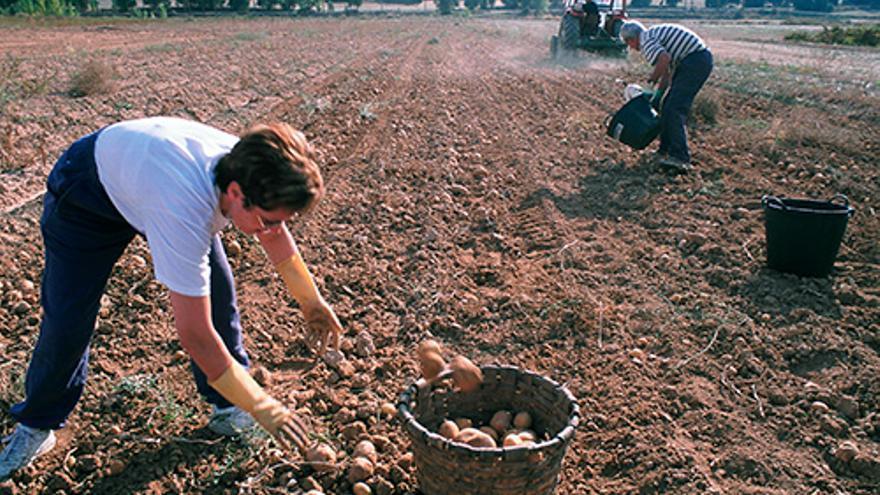 Muchas mujeres ayudan en las labores agrarias sin conocer las posibilidades de la titularidad compartida