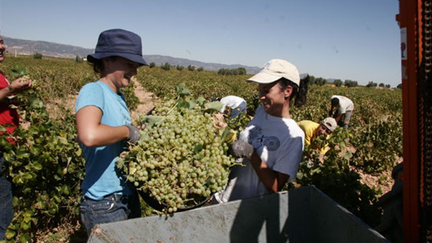 Labores agrícolas en las que participan mujeres, en una imagen de archivo