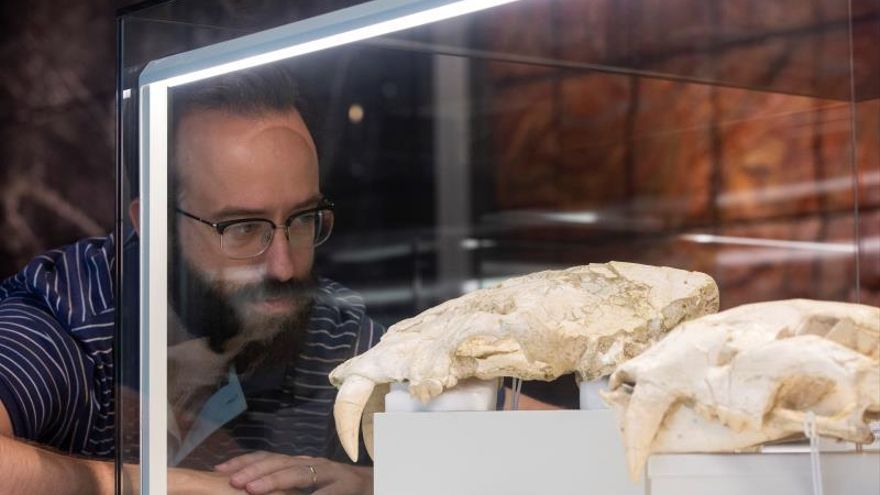 Exponen 160 fósiles de la fauna que habitó la península hace 9 millones años
