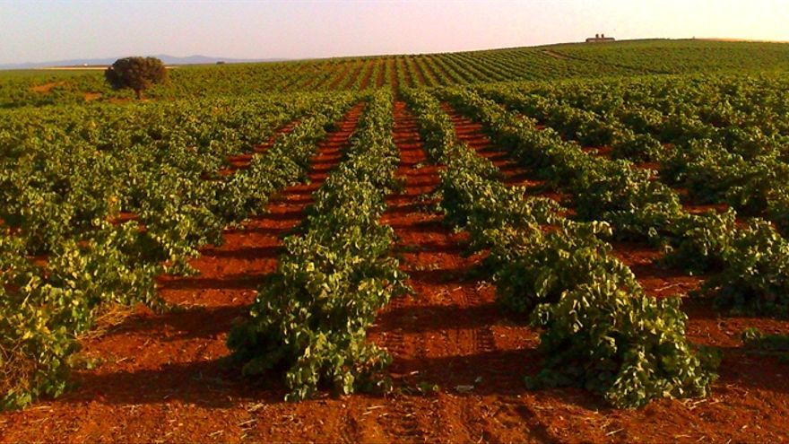 Viñedos de Extremadura / http://www.rutadelvinoriberadelguadiana.com