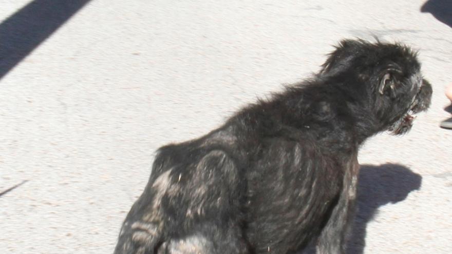 Fotografía de uno de los perros adjuntada a la denuncia en la que se observa la caquexia por malnutrición severa que padece. Foto: Animal Rescue España