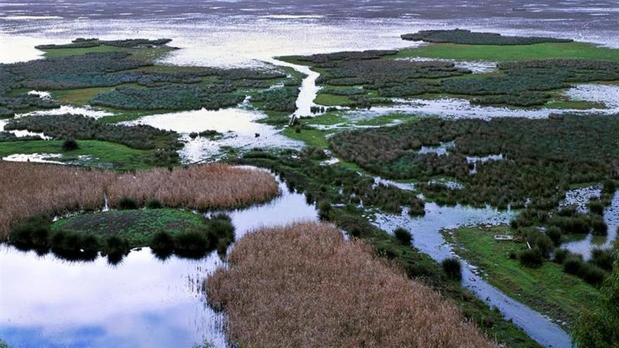 Campaña de firmas de Greenpeace contra el proyecto de Gas Natural en Doñana