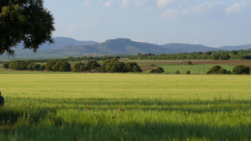 Campo de Montiel en el término de Torrenueva (Ciudad Real) / Foto: Ayuntamiento