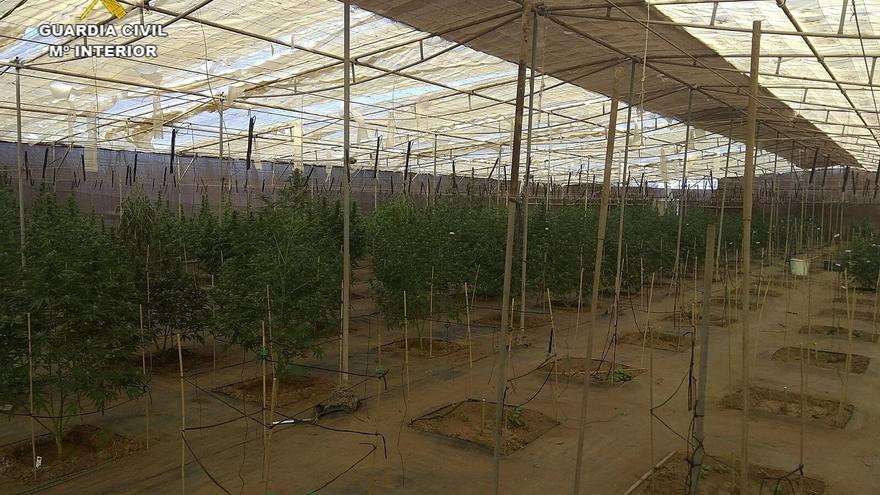 Interior de uno de los invernaderos, con la marihuana en proceso de cultivo