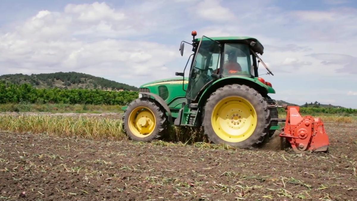 Un tractor en un campo valenciano de ajos tiernos.