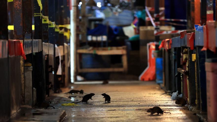 Imagen de ratas merodeando por un mercado de comida cerrado en Malasia por el coronavirus.