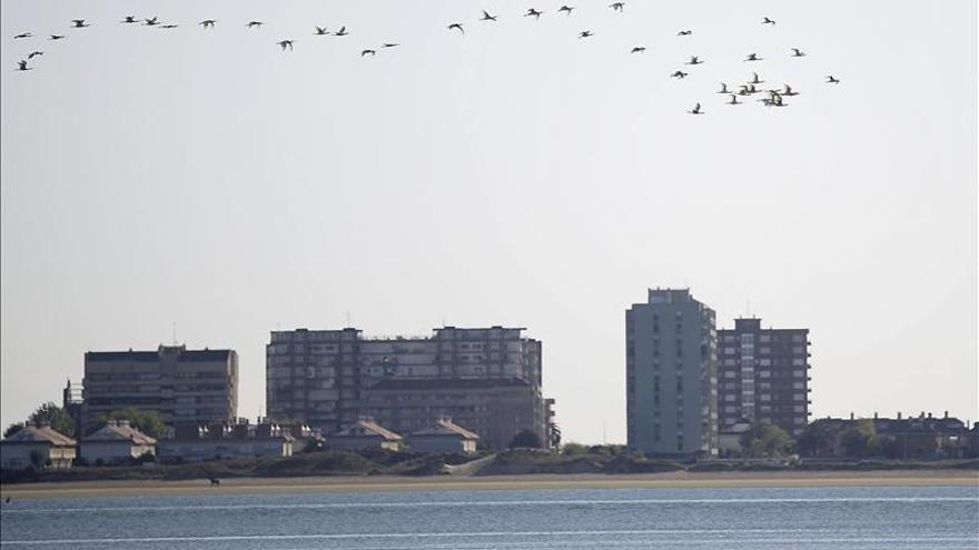 Las aves migratorias prefieren las gambas de las Marismas de Santoña