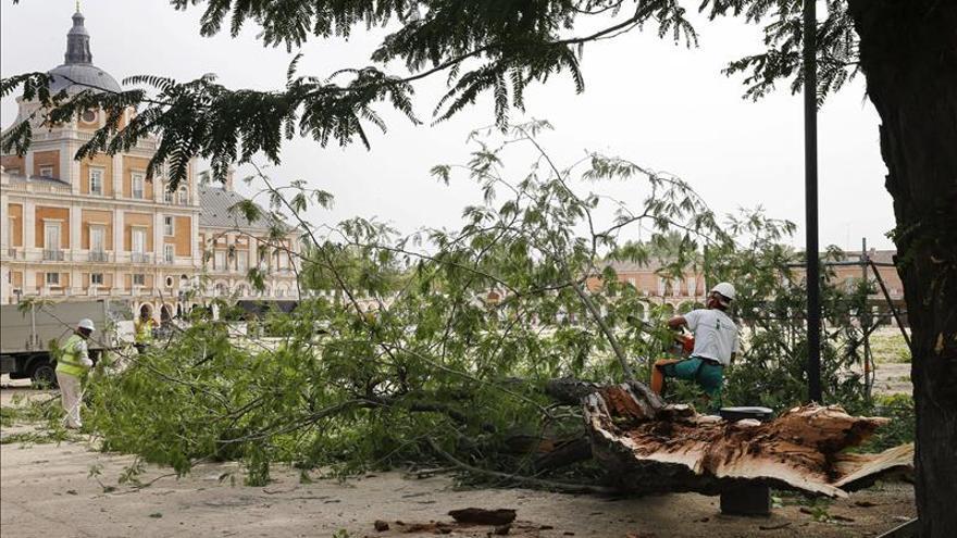 Dos árboles de más de 200 años entre los caídos en Aranjuez por la tormenta