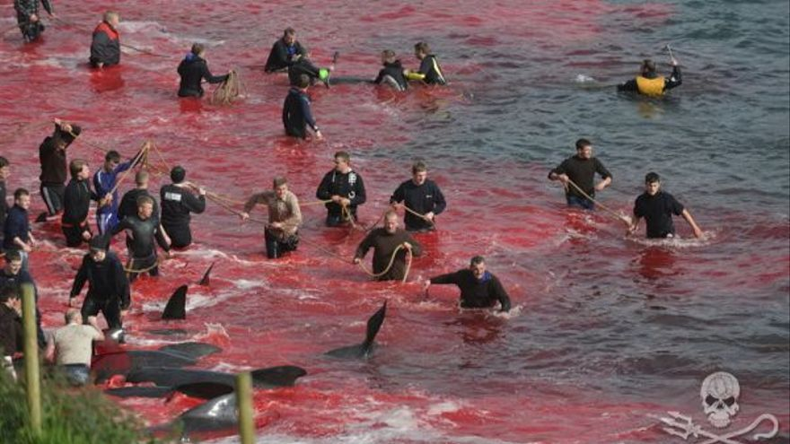 Matanza ilegal de cetáceos en Feroe. Foto: Sea Shepherd