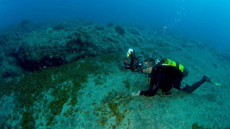 Imagen cedida por la organización de la 23 edición del fotosub isla de El Hierro de uno de los participantes durante la última inmersión del día. EFE (Solo uso editorial)