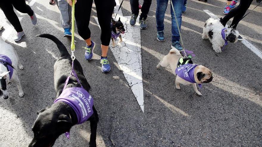 Perrotón premia a la Policía Nacional por su labor contra el abandono animal